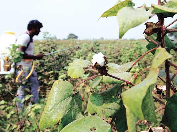 CCI orders investigation against Monsanto on govt complaint